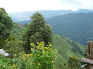 Bwindi View